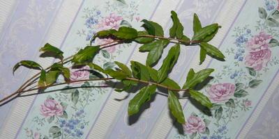 Что за растение?!