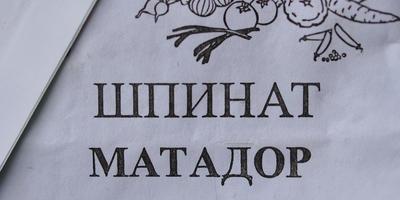 """Мой самый любимый сорт шпината - """"Матадор"""""""