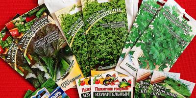 Отчёт о получении семян для тестирования (Гавриш)
