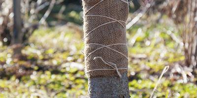Клей аэрозоль для защиты от насекомых. Изготовление ловчего пояса. Первые выводы