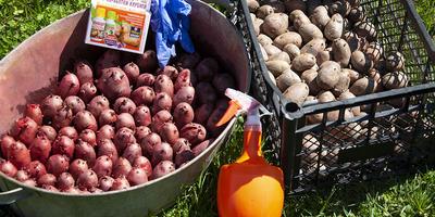 Командор+. Тест. Обработка клубней картофеля