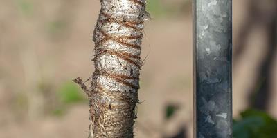 Клей аэрозоль для защиты от насекомых. Итоги и выводы