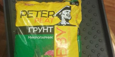 Петуния Василиса Премудрая F1. Этап первый. Посев