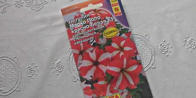 Марко Поло красно-белая F1. Этап 4. Развитие растений и уход за ними