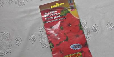 Петуния Василиса Премудрая F1. Этап 4. Развитие растений и уход за ними