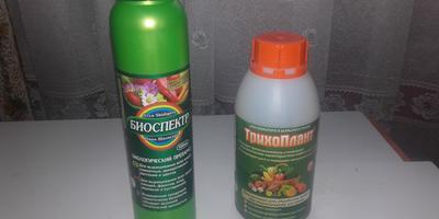 Рассада цветной капусты: без Трихопланта и Биоспектра ничего бы не получилось