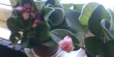 Мои любимые комнатные растения