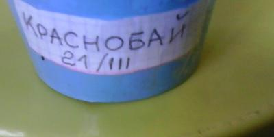 Томат Краснобай F1. I этап. Тест на всхожесть (продолжение)