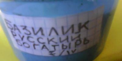 Базилик Русский богатырь. Тест на всхожесть