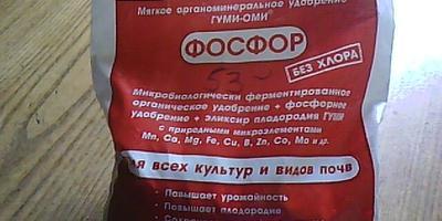 Томат Краснобай F1. IV этап. Цветение и появление первых плодов