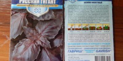 Базилик Русский гигант. Начало цветения