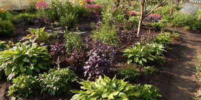 Любимица моего сада
