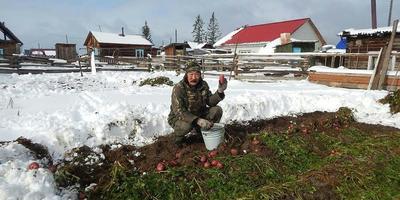 Два урожая картофеля: возможно ли такое в сибирской столице?
