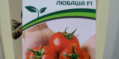 Здравствуйте, конкурсные семена помидорок!