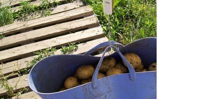Жила-была картошка под черным агроспаном