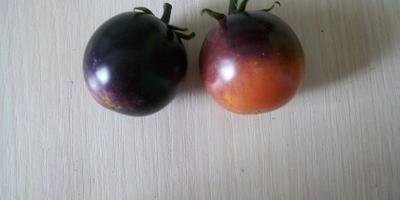 Это помидор, баклажан или слива?