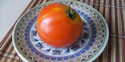 Отчет № 3 о призовых помидорах от «Партнера»