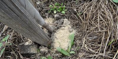 Экологичный секрет — муравьев на деревьях больше нет!