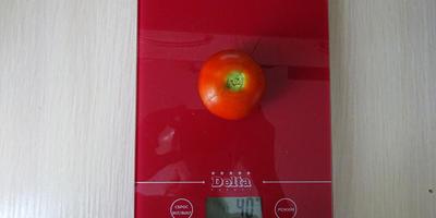 Лирика-1: первый томатик