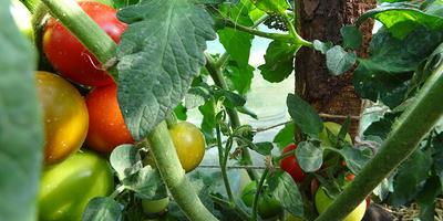 Макушка Лирики-2 принесла парочку плодов