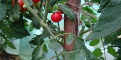 Лирика-макушка почти в полный рост