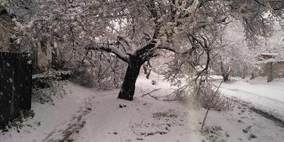 Зима вернулась... что делать? Чем помочь растениям после заморозков?