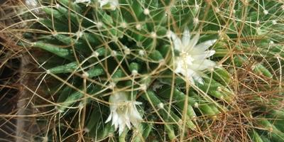 Агрикола - помощник по уходу за растениями