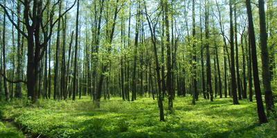 Лесотерапия. Лечение природой, или 11 причин прогуляться по весеннему лесу