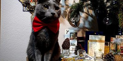 К нам приходит Новый, Старый... Старый Новый год, и об этом распрекрасно знает милый кот