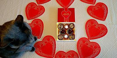 С Днём святого Валентина, дорогие семидачники!