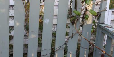 Как укрыть лианы вместе со шпалерами, или Одеялко для актинидий