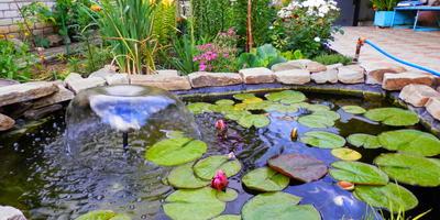 Какими средствами можно очищать воду в садовом прудике, чтобы не навредить живущим в нем растениям?