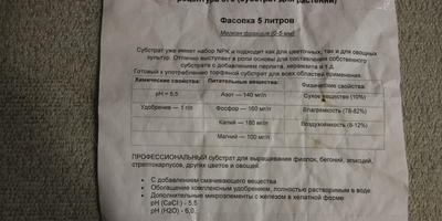 Тест-проверка на всхожесть томатов сорта Козырь