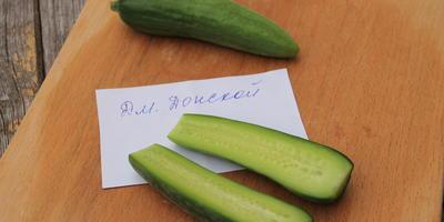 Огурец Дмитрий Донской F1. VIэтап. Плоды