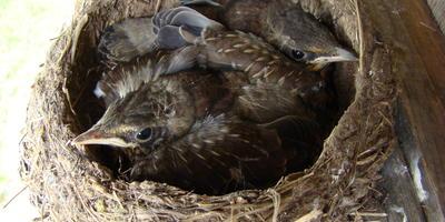 Птичьи гнезда