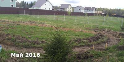 Записки новых дачников. 2016 г. Лето: газон