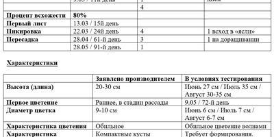 Петуния Ольга F1. Заключительный этап