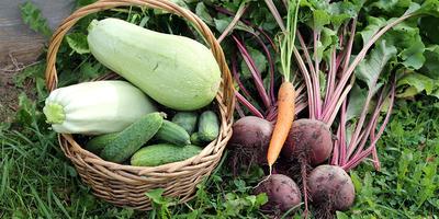 К экспериментам готовы, или Самые необычные обычные овощи