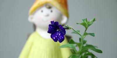 Приз за тестирование семян петуний от Агрофирмы Аэлита