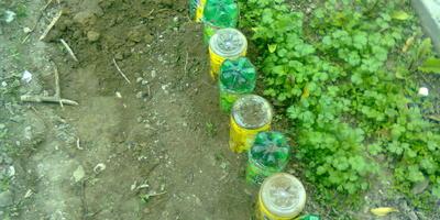 Ограждение для грядок из пластиковых бутылок