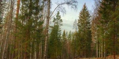 Фотографии и отзывы о коттеджном поселке «Лесной Хутор» (Всеволожский р-н ЛО)