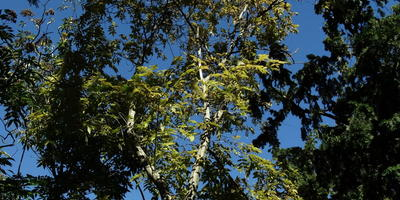 Помогите определить дерево
