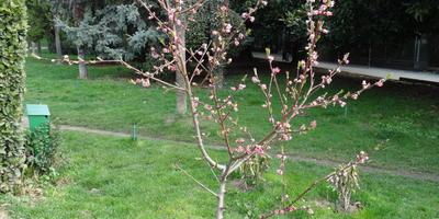 Растут два похожих деревца, но у одного лепестки нормальные, а у другого укороченные. Это дефект?