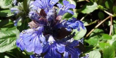 Сейчас цветет неизвестный мне цветок. Подскажите, что это?