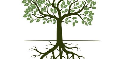 Кроны бывают разные, или Как устроено дерево