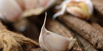 Чеснок: польза и вред для здоровья