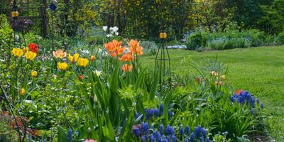 3 ярких клумбы из весеннецветущих луковичных