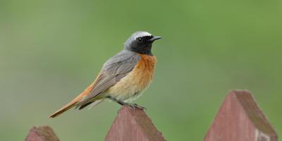 Птичьи уроки для взрослых и детей