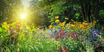 Остановить агрессора: как ограничить разрастающиеся растения