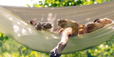 Товары для комфортного отдыха на даче: садовая мебель